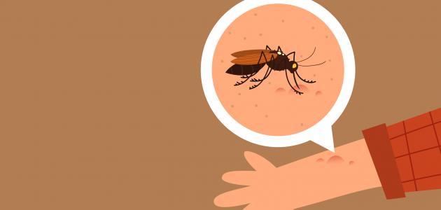 آثار حشرة البق على الجلد