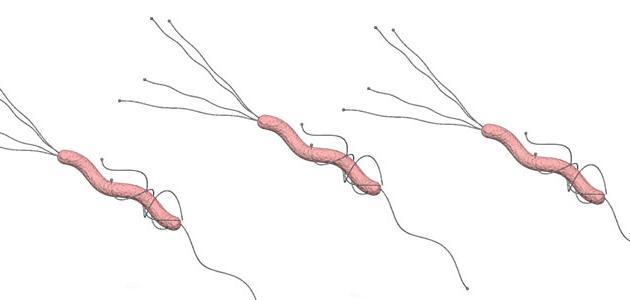 ما أعراض جرثومة المعدة