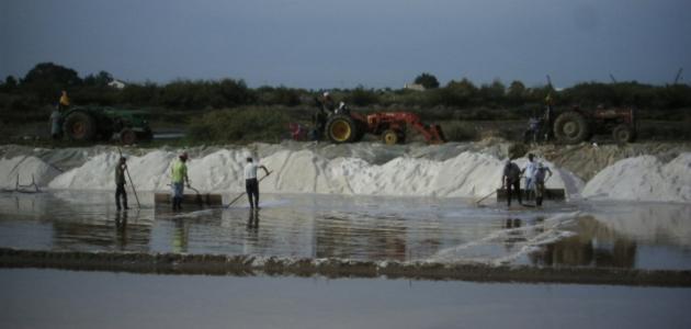 من أين يستخرج الملح