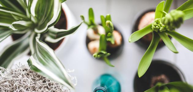 أفضل وقت لسقي النباتات