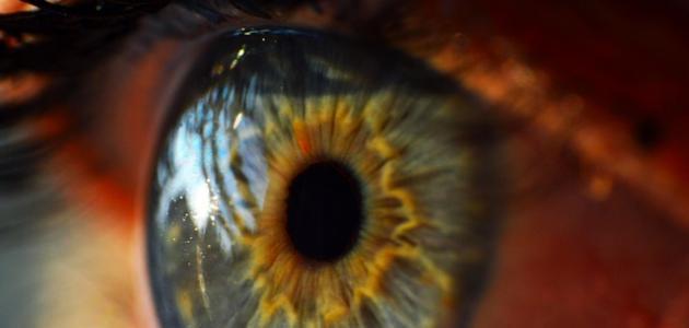 اسم الجزء الشفاف من العين