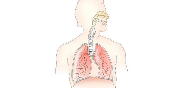تركيب الجهاز التنفسي