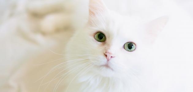 أجمل قطط