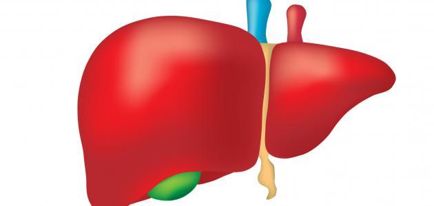 أضرار التبرع بجزء من الكبد