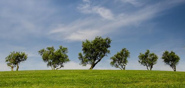 كيف نحافظ على موارد البيئة