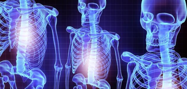 أجزاء الجهاز العظمي