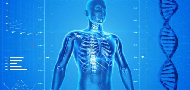 كم عظمة في القفص الصدري