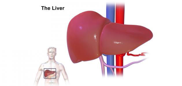 أضرار متبرع الكبد