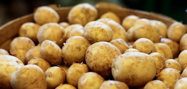 طريقة تخزين البطاطس