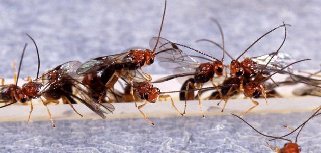 كيفية التخلص من الحشرات الطائرة الصغيرة في المطبخ
