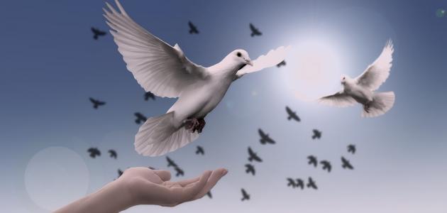 حكمة عن السلام