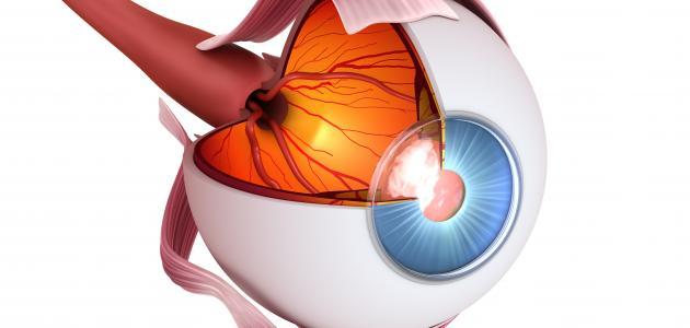 أجزاء العين ودورها