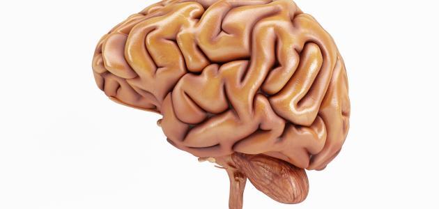 أمراض المخ والأعصاب