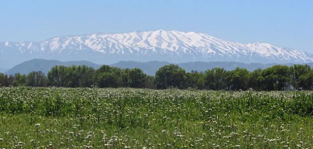 ما أعلى جبل في سوريا