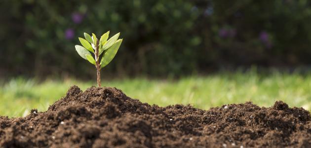 المحافظة على نظافة وسلامة الغلاف الجوي