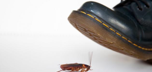 كيفية مكافحة الصراصير المنزلية