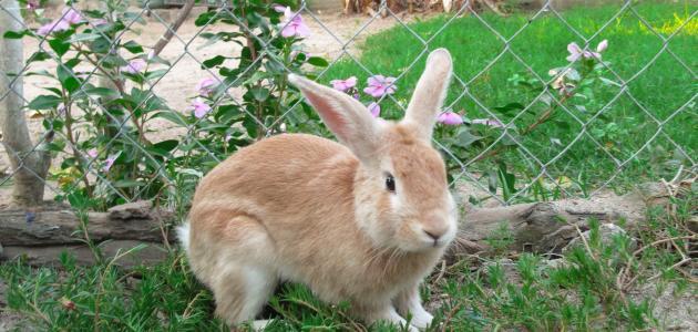 أفضل طرق تربية الأرانب