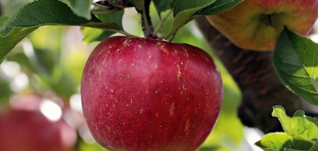 ما فوائد التفاح على الريق