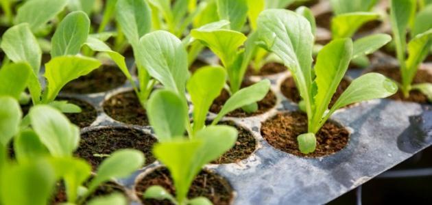 معلومات عن استخدام النبات كغذاء