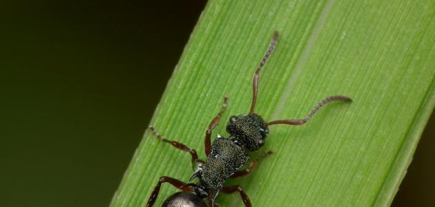 تفسير النمل في المنام