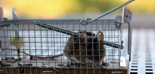 أفضل طريقة للإمساك بالفأر