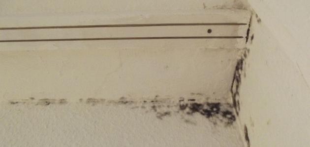 كيفية معالجة الرطوبة في الجدران