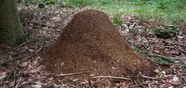 اسم بيت النمل
