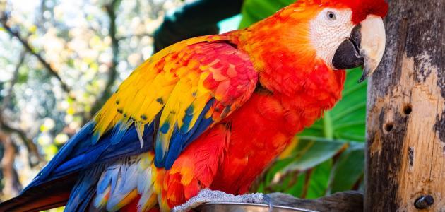 أجمل طيور الزينة