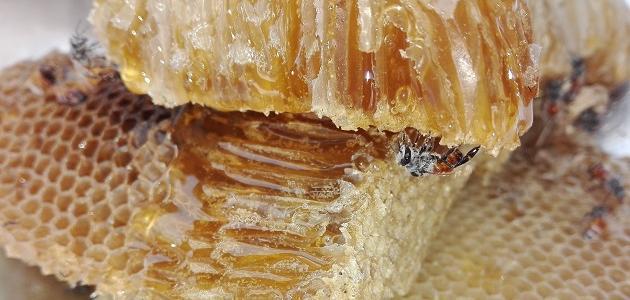 ما فائدة حبوب غذاء ملكات النحل