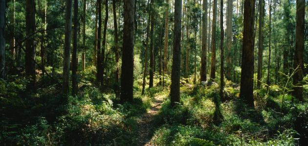 كيف نحافظ على الغابات