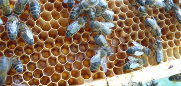 أنواع وفوائد العسل