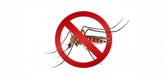 التخلص من الحشرات الطائرة في المنزل