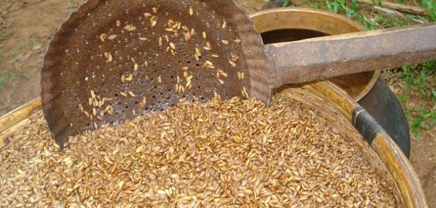 فوائد القمح المسلوق للرجيم
