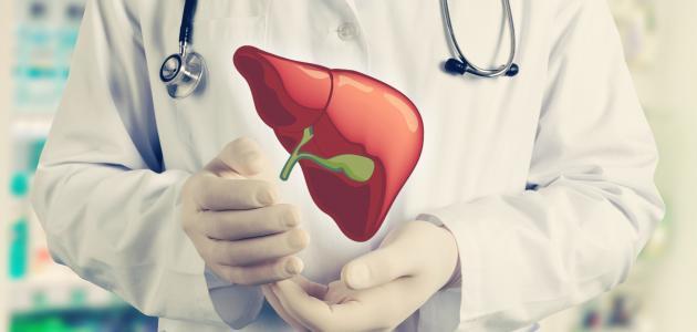 كيفية زراعة الكبد