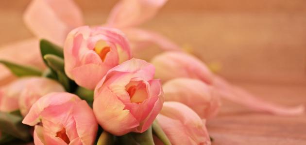أجمل قصائد نزار قباني في الحب