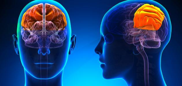 كيف يعمل المخ البشري