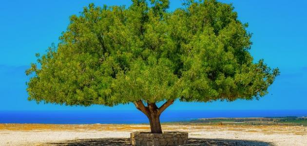ما هو عيد الشجرة