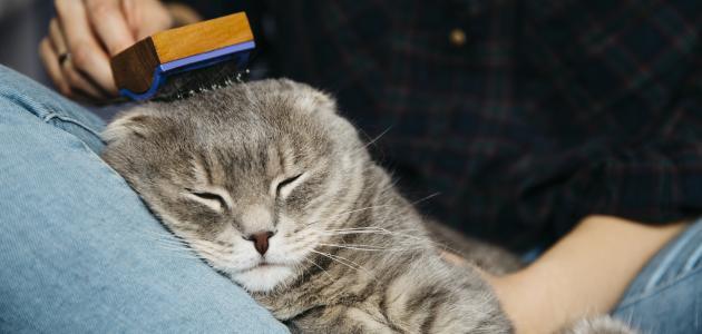 كيفية التخلص من البراغيث عند القطط