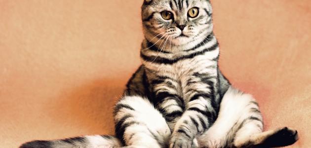 كيفية التخلص من رائحة بول القطط