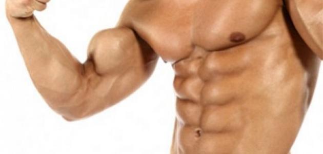 كيفية تكوين عضلات الجسم