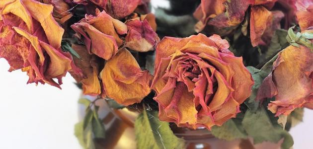 كيفية تجفيف الورد الطبيعي