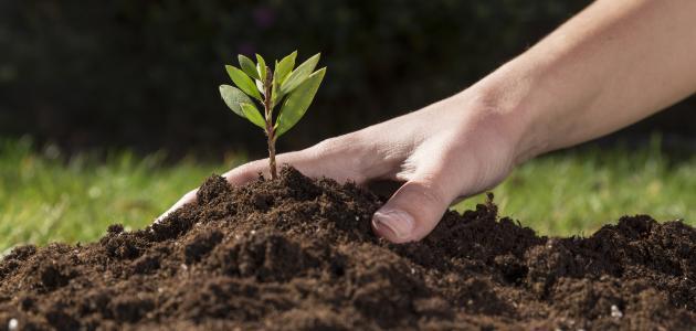 كيفية تحضير التربة للزراعة