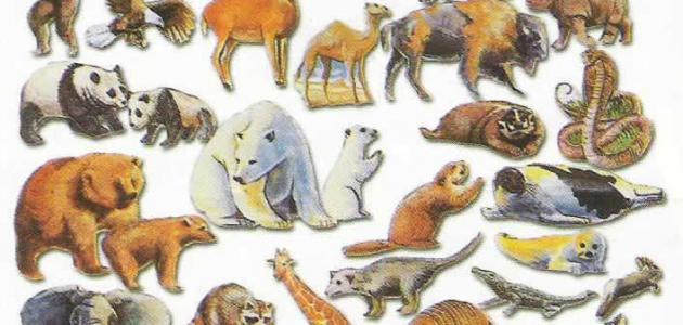 لماذا خلق الله الحيوانات