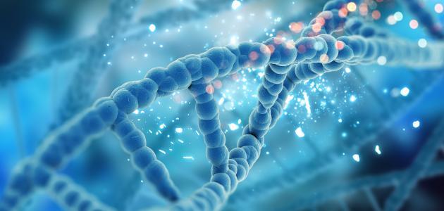 أهميةالخلايا الجذعية