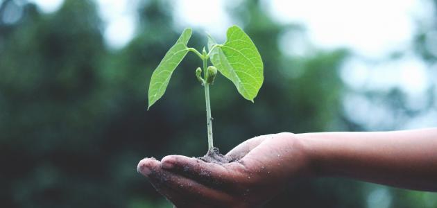 كيفية الحفاظ على النباتات