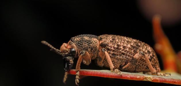 أسباب ظهور حشرة السوس في المنزل