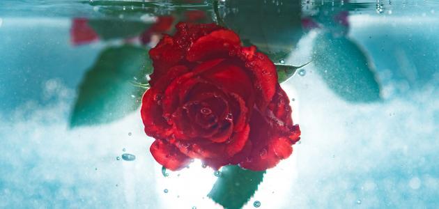 قصائد محمود درويش عن الحب