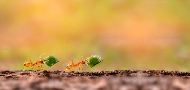 معلومات عن النمل