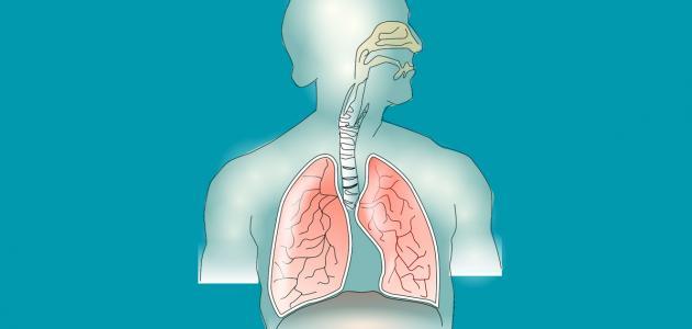 ما هي مكونات الجهاز التنفسي