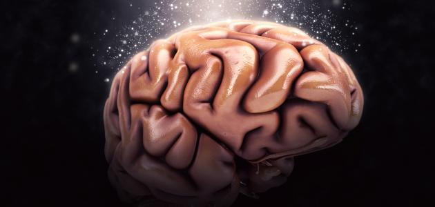 أجزاء الدماغ ووظيفة كل جزء